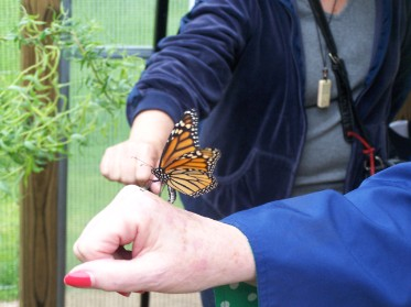 monarch finally lands on a hand